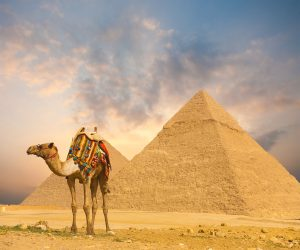 Wide sky sunset behind Egyptian Pyramids Khafre and colorfully outfitted standing camel at evening in Giza Cairo Egypt. Horizontal wide angle with plenty of sky copy space